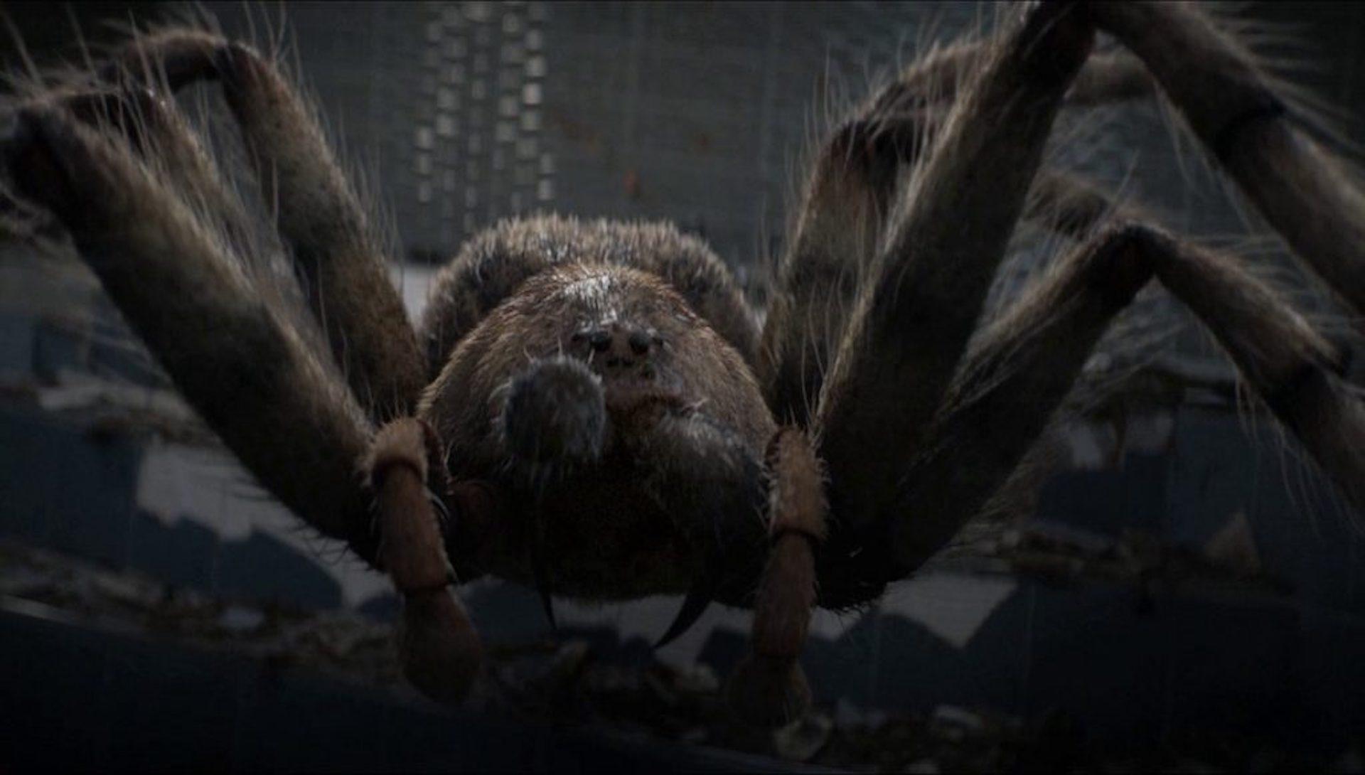 Arachnids In The UK